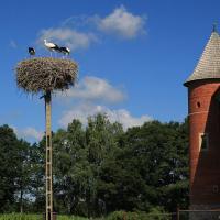 bociany przy zamku w Tykocinie