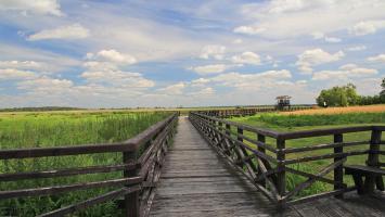 Waniewo - kładka w Narwiańskim Parku Narodowym - zdjęcie