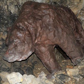 Jaskinia Wierzchowska Górna - niedźwiedź jaskiniowy
