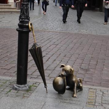 Pies Filuś w Toruniu