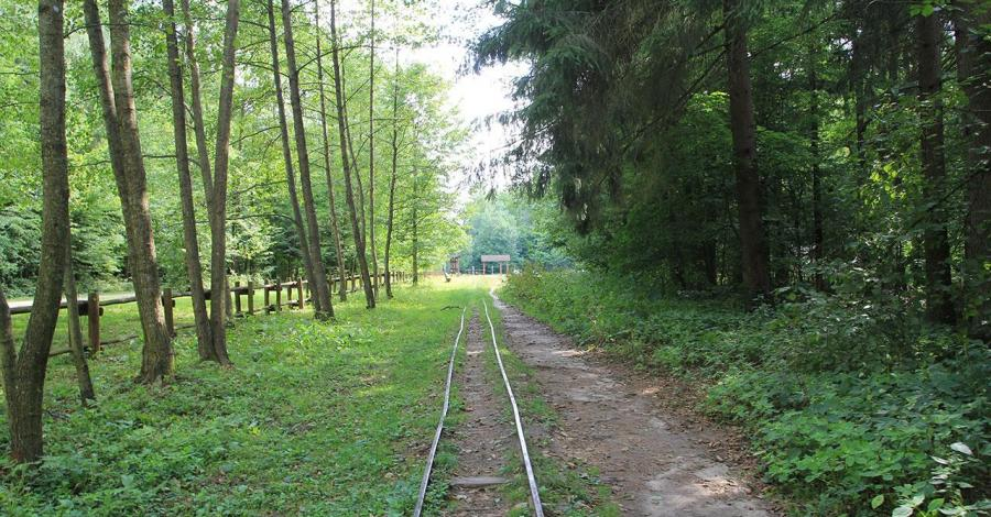 Ciuchcia w Białowieży - zdjęcie