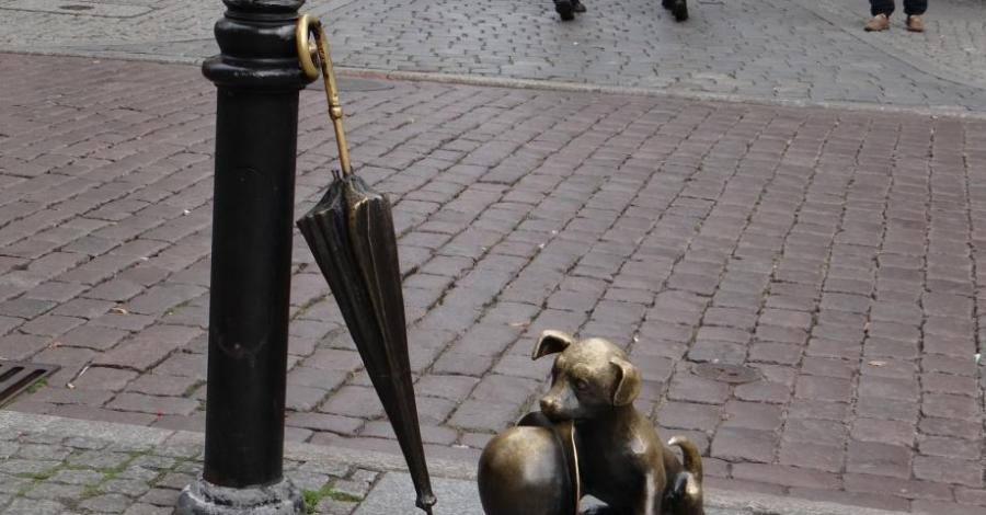 Pies Filuś w Toruniu - zdjęcie
