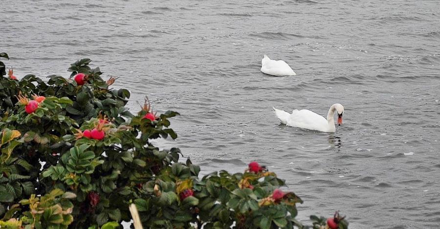 Rezerwat Ptasi Raj w Gdańsku - zdjęcie