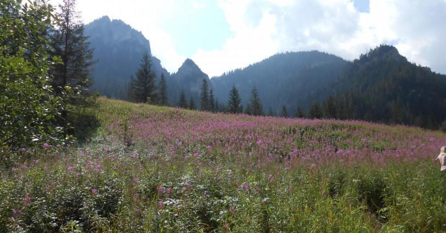 Dolina Kościeliska - zdjęcie