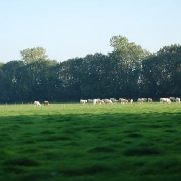 Holandia - zdjęcie