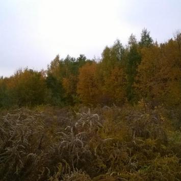 Jesienny spacer po Lasku Wolskim w Krakowie