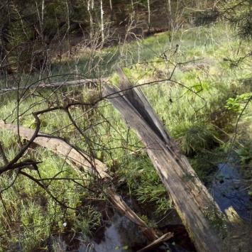 Park Krajobrazowy Lasy nad Górną Liswartą