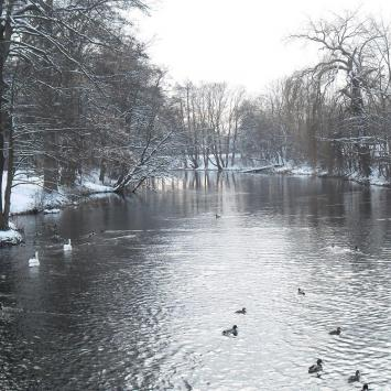 Rzeka Rega