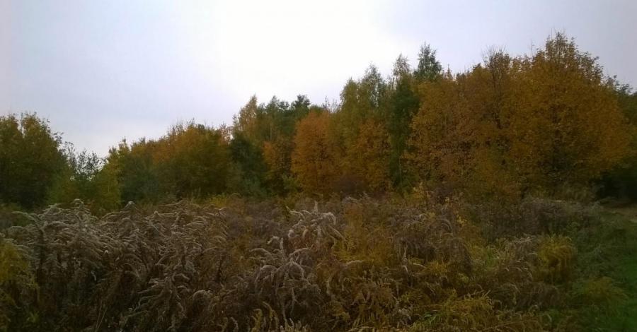 Jesienny spacer po Lasku Wolskim w Krakowie - zdjęcie