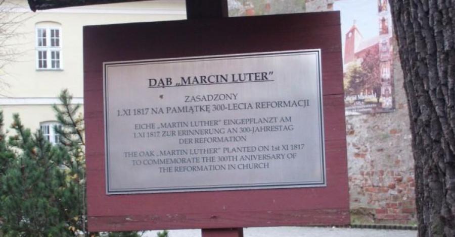 Dąb Marcin Luter w Darłowie, mokunka