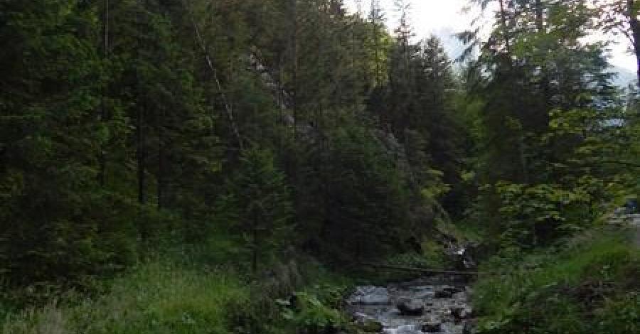 Dolina Strążyska w Tatrach - zdjęcie