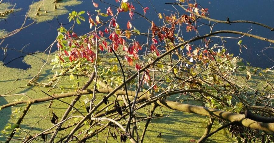 Granatowe Źródła w Załęczańskim Parku Krajobrazowym, Magdalena