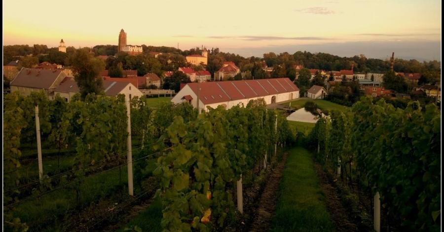Winnica w Paczkowie - zdjęcie