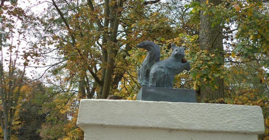 Inowrocławskie wiewiórki - zdjęcie