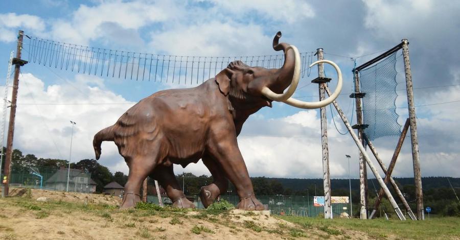 Mamut w Szczytnej - zdjęcie