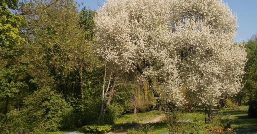 Ogród Botaniczny w Lublinie - zdjęcie