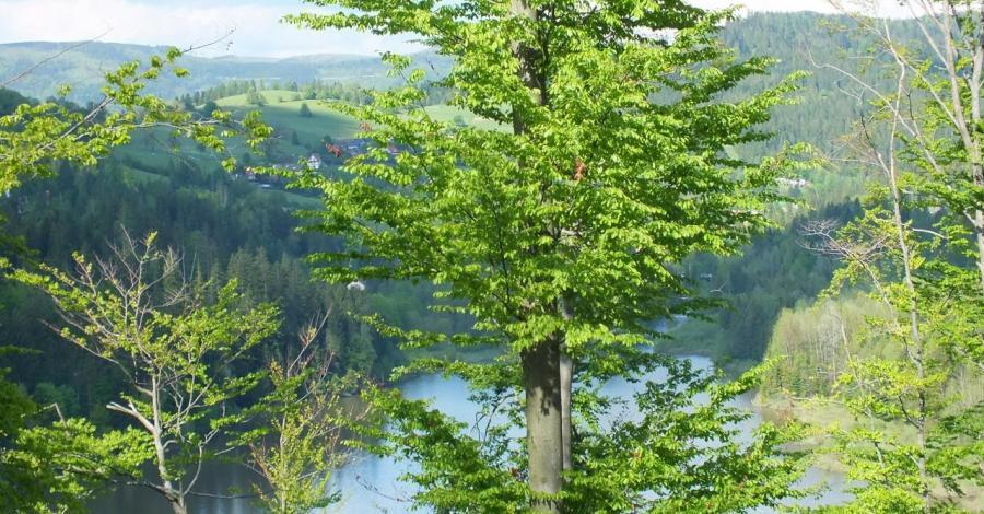 Park Krajobrazowy Beskidu Śląskiego - zdjęcie