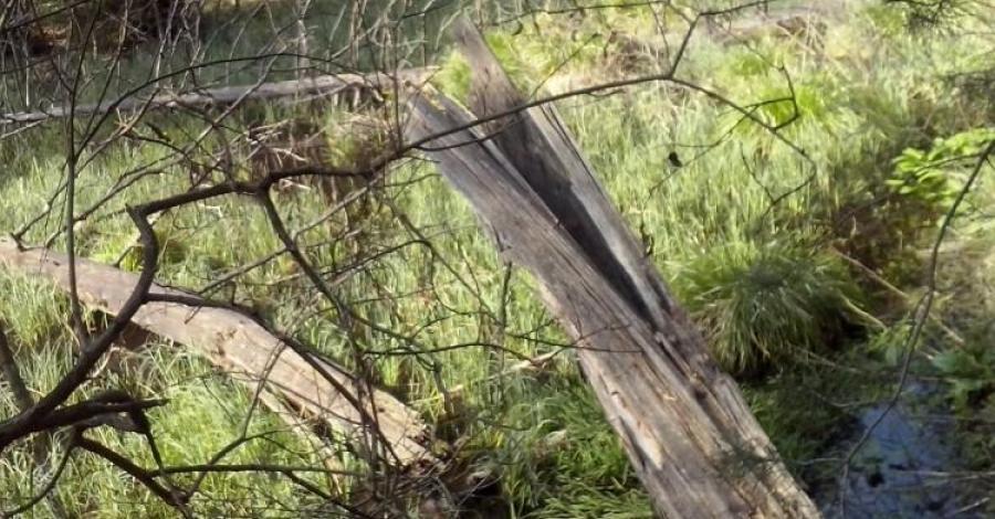 Park Krajobrazowy Lasy nad Górną Liswartą - zdjęcie