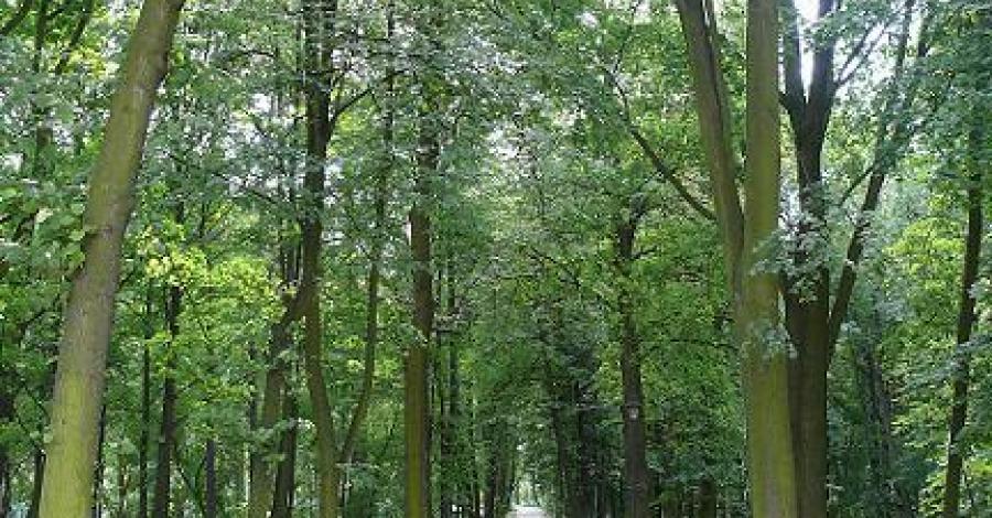 Park Miejski w Kazimierzy Wielkiej - zdjęcie