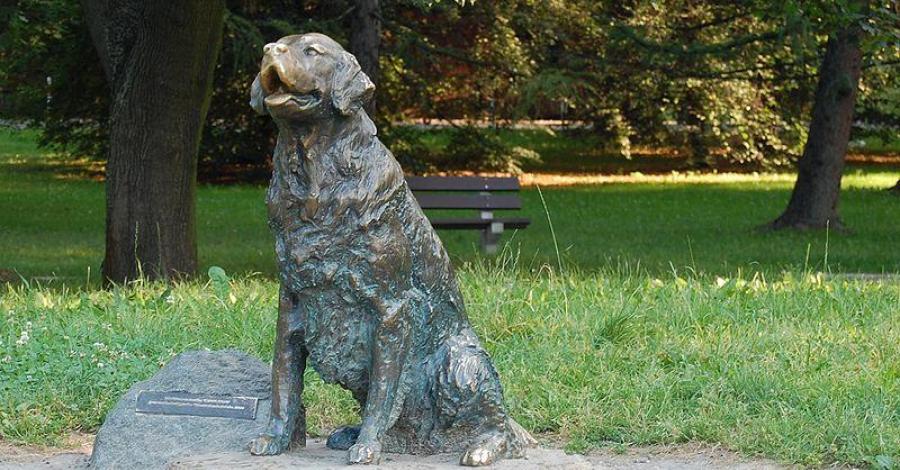 Pomnik Szczęśliwego Psa w Warszawie - zdjęcie