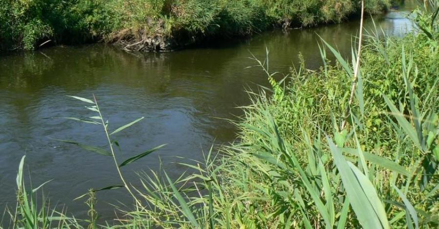 Rzeka Dłubnia, mokunka