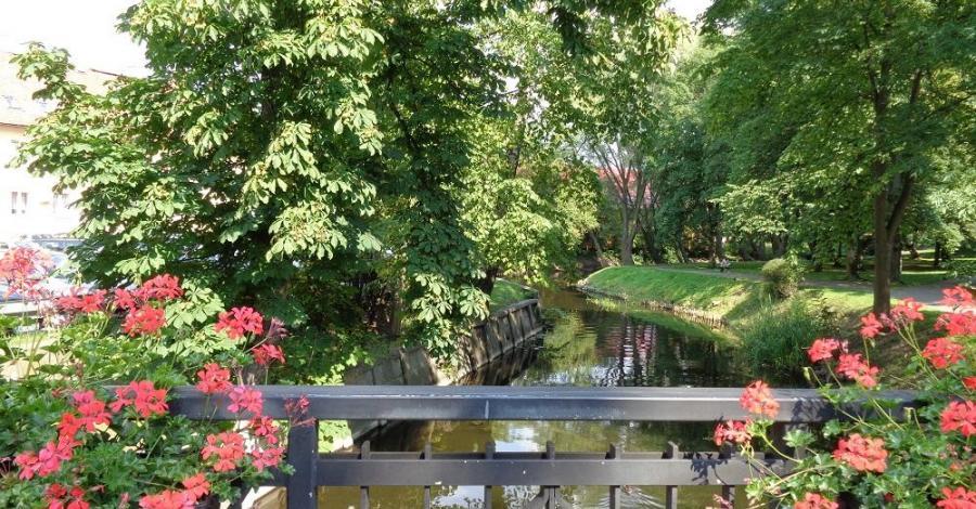 Rzeka Drwęca - zdjęcie