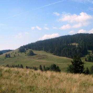 Przełęcz Rozdziela w Pieninach