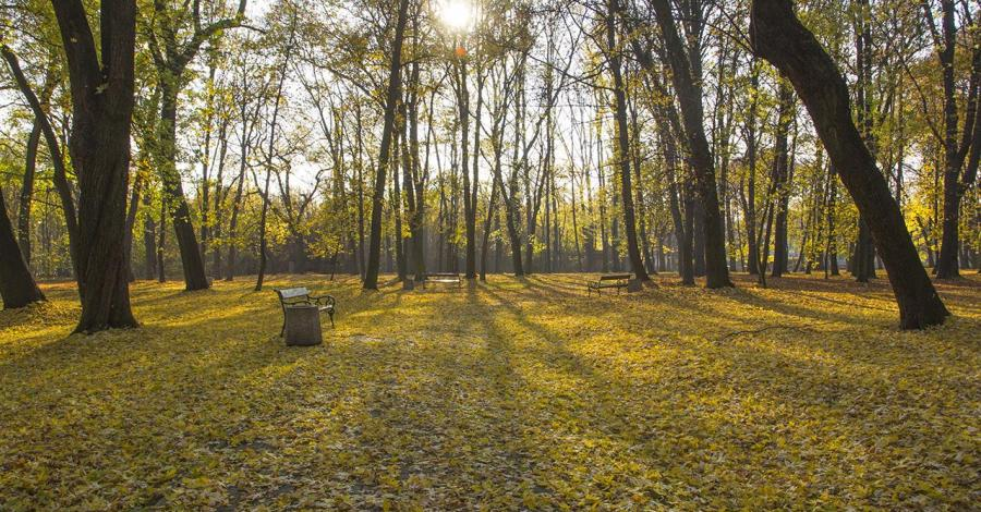 Jesiennie parkowo na Górnym Śląsku - zdjęcie