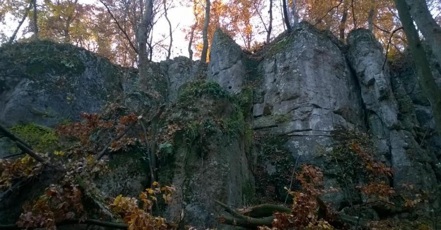 Barwy jesieni na porannym spacerze - zdjęcie