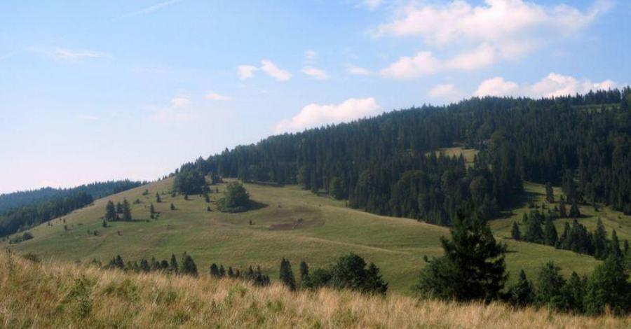 Przełęcz Rozdziela w Pieninach - zdjęcie