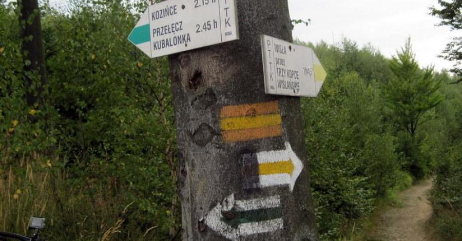 Smerekowiec w Beskidzie Śląskim - zdjęcie