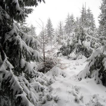 Beskid Śląski: Szosów Wielki (zimą).