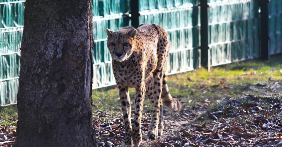 Zimowe Zoo w Chorzowie - zdjęcie