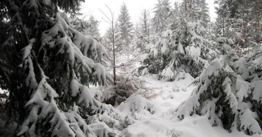 Beskid Śląski: Szosów Wielki (zimą). - zdjęcie