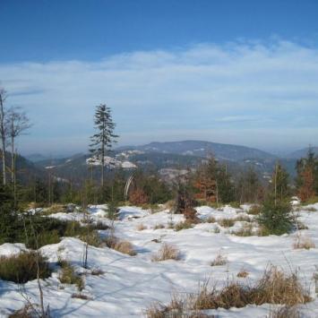 Beskid Śląski: Stożek Wielki 978mnpm (zimą).