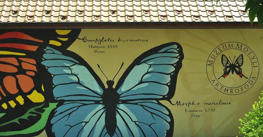 Muzeum Motyli w Bochni, arthropoda