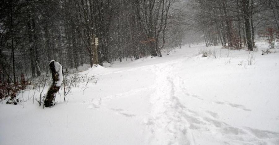 Przełęcz Beskidek w Beskidzie Śląskim - zdjęcie