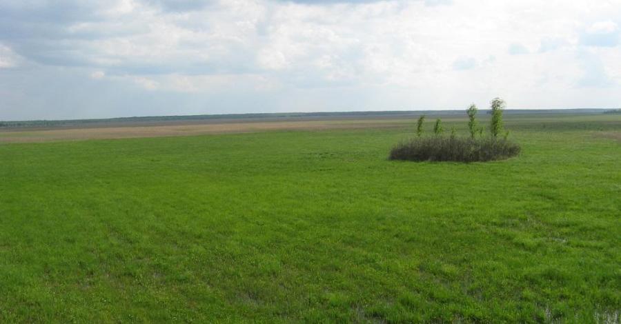 Carska Droga na bagnach biebrzańskich - zdjęcie