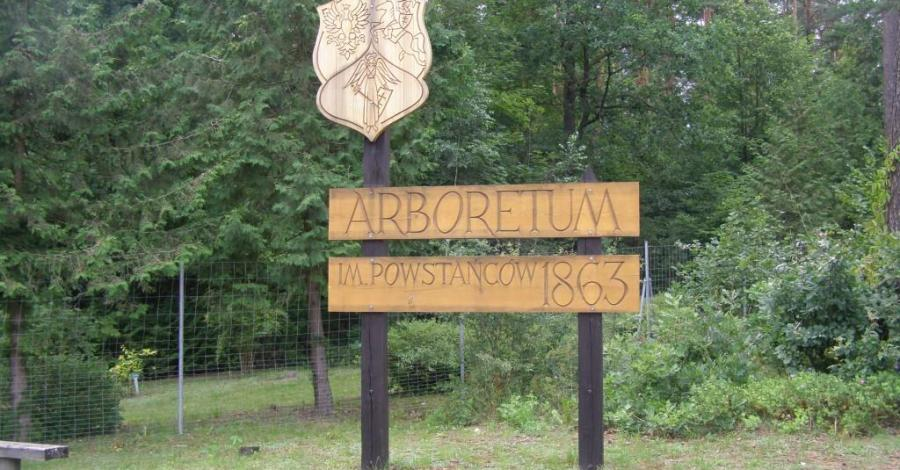 Arboretum im. Powstańców 1863 w Kopnej Górze - zdjęcie