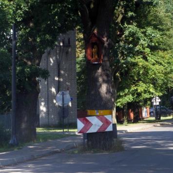 Dąb Krzysztof w Zwierzyńcu