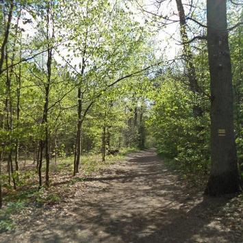 Lasek Południowy w Słupsku