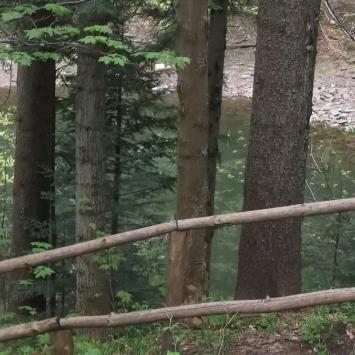 Mokry Stawek na Babiej Górze