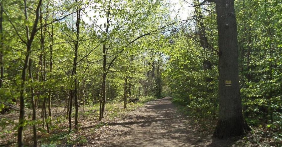 Lasek Południowy w Słupsku - zdjęcie