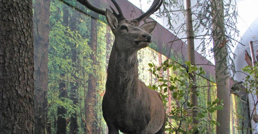 Muzeum Świętokrzyskiego Parku Narodowego - zdjęcie