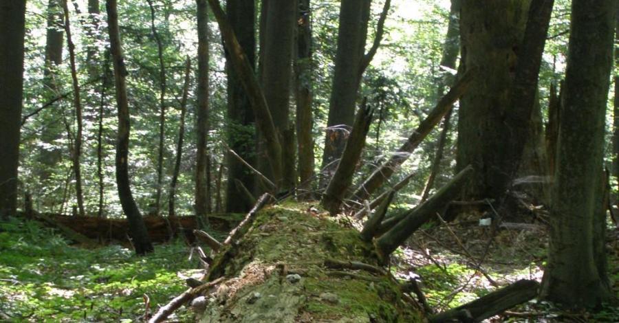 Rezerwat Bukowa Góra na Roztoczu - zdjęcie