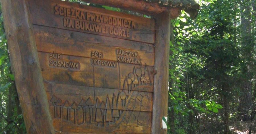 Ścieżka dydaktyczna na Bukową Górę - zdjęcie