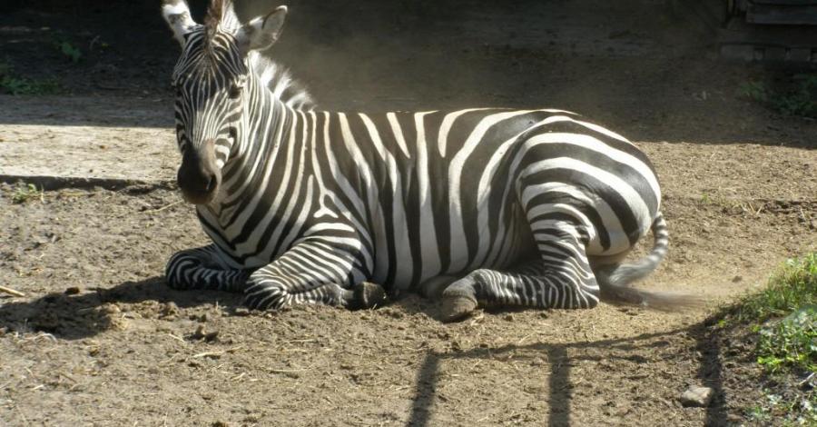 Zoo w Zamościu - zdjęcie