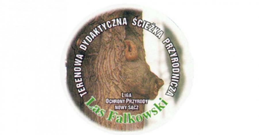 Las Falkowski w Nowym Sączu, Anna Piernikarczyk