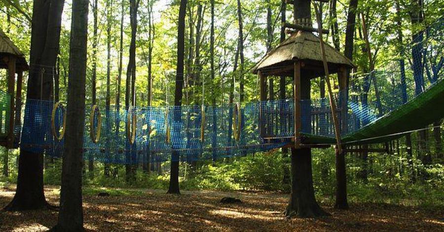 Park Leśny w Radlinie - zdjęcie