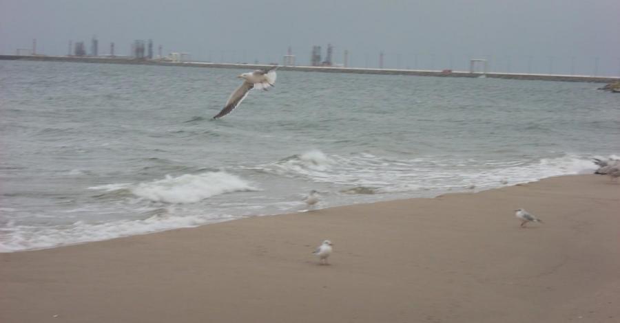 Plaża na Westerplatte - zdjęcie
